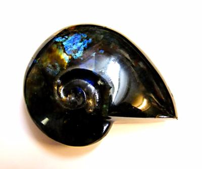 CARVING OF A SHELL IN LABRADORITE.   SP10531POL