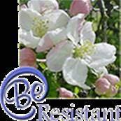 FLOWER ESSENCE by Sun Essences RESISTENT 30ML. SUN15