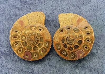 POLISHED FACE AMMONITE SECTION PAIR. SP6976