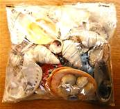 SEA SHELLS COLLECTORS STARTER PACK. SPR9532
