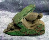 TURTLES CARVED INTO CHRYSOCOLLA WITH CUPRITE MATRIX.   SP7579SHLF