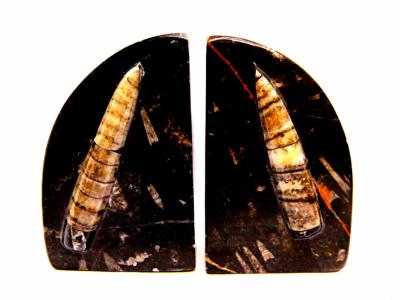 ORTHERCERAS FOSSILS PAIR OF BOOKENDS.   SP10560SHLF