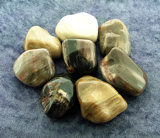 PETRIFIED WOOD POLISHED PEBBLES & PALMSTONES