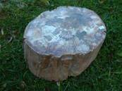 PETRIFIED WOOD - Specimen One. PETWOO 01